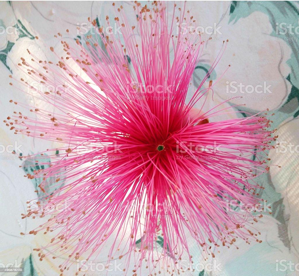 Exotic Bloom stock photo