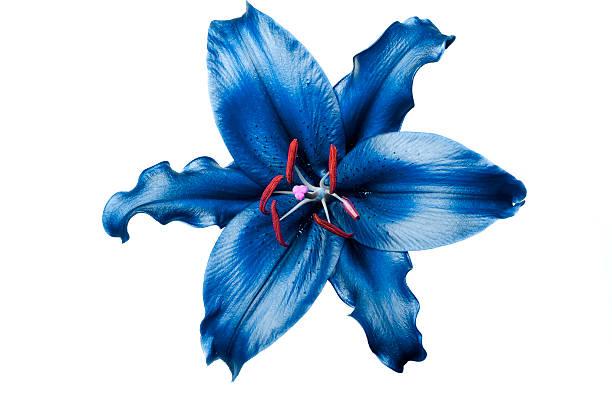 Exotic blue lily on white background picture id157475765?b=1&k=6&m=157475765&s=612x612&w=0&h=cbccmfpjpnal1yrpt1yutjlvtolqnboz2r21va0tkaq=