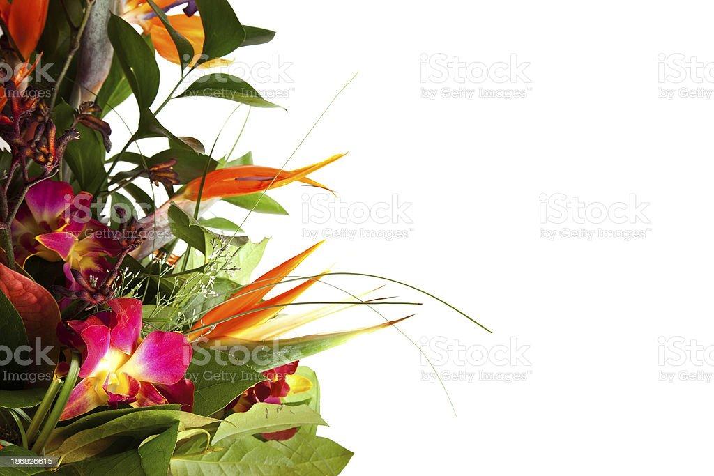 Exotic bouquet. stock photo