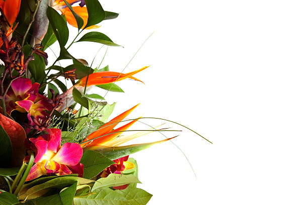 Exotic bouquet. stock photo
