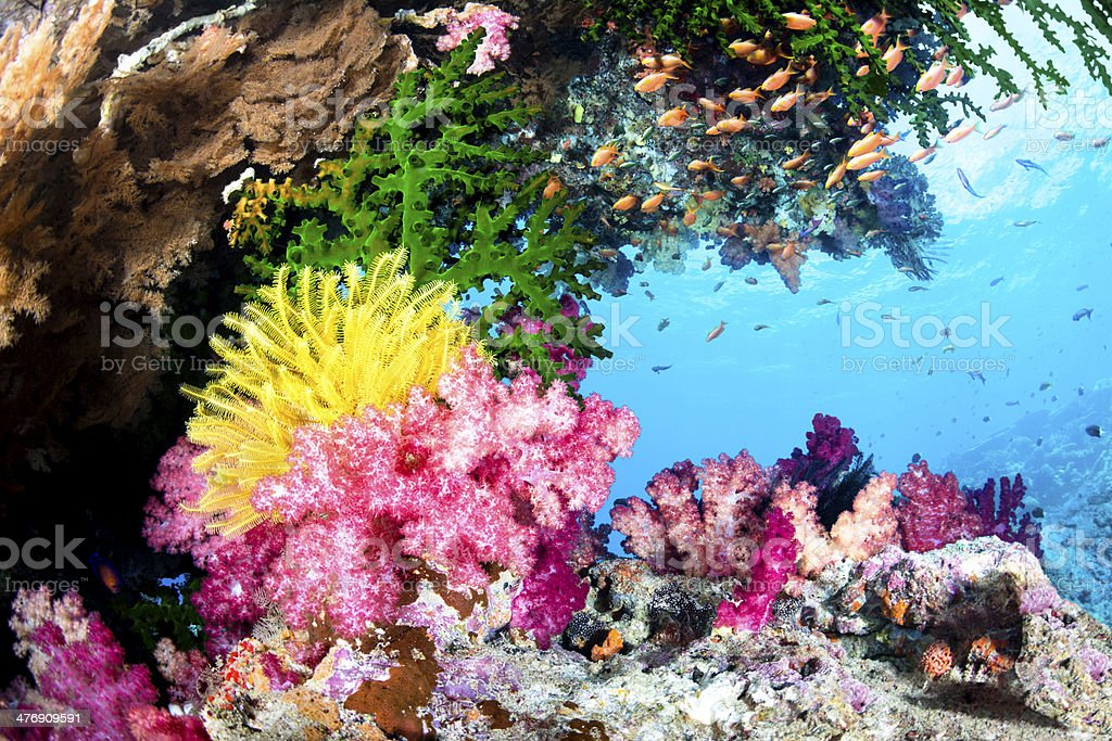 Exotic Coral Reef stock photo