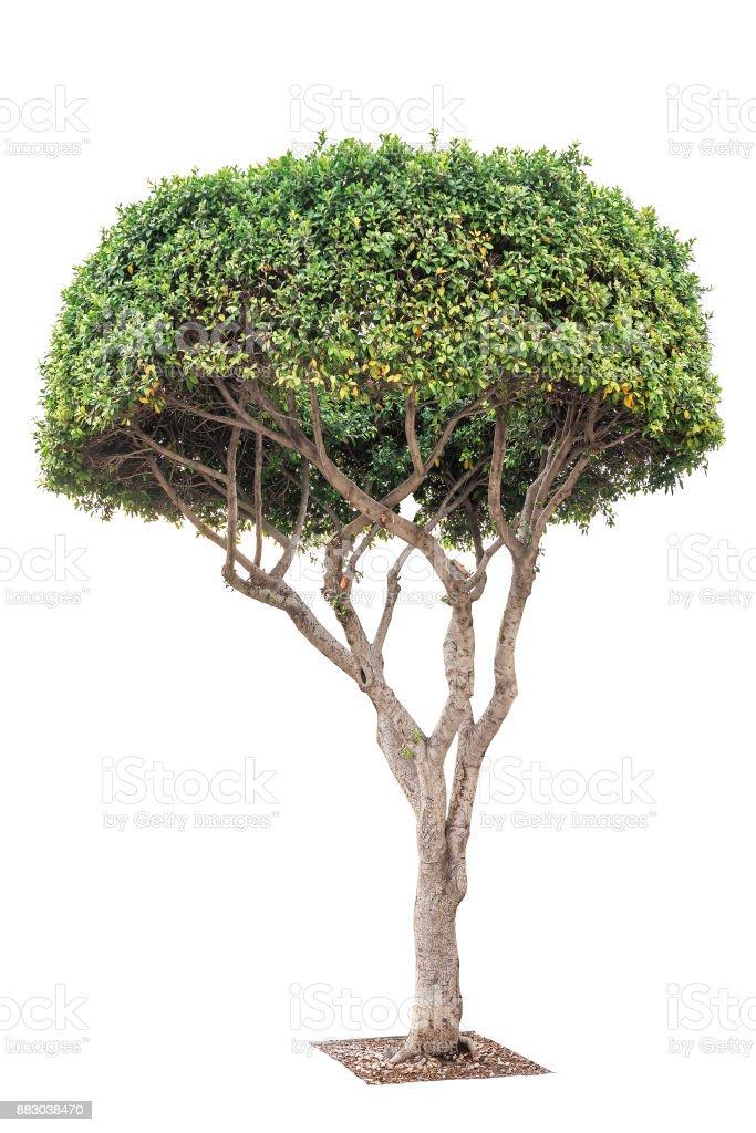exotic decorative tree stock photo