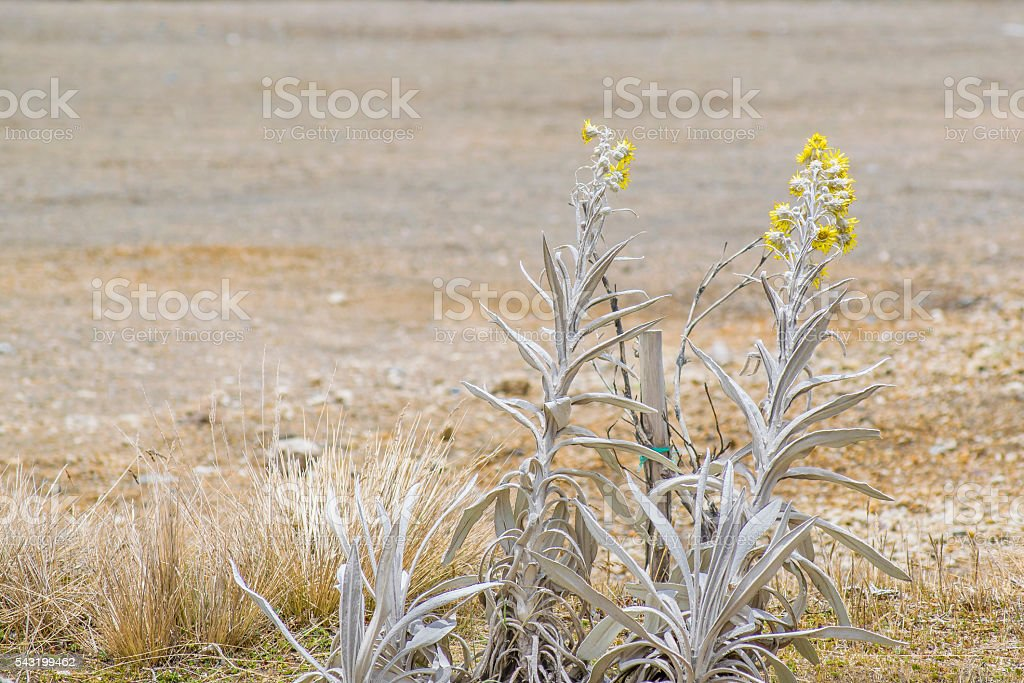 Exotic Dry Andean Plants stock photo