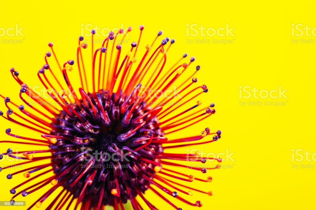 Exotic flower over ultra violet background stock photo
