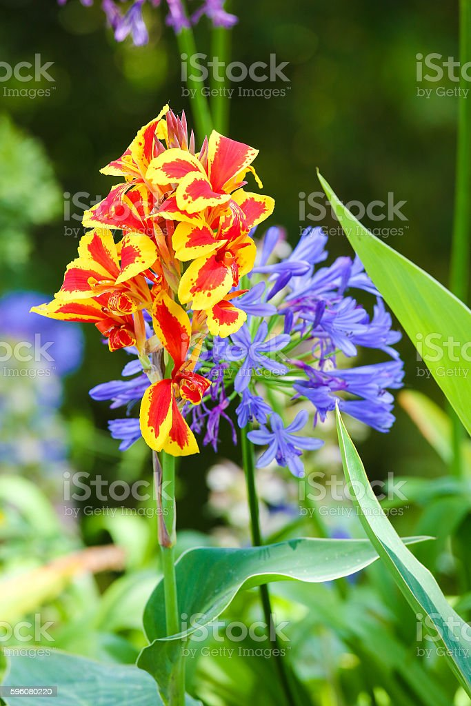 Exotic flowers at Monserrate Palace in Sintra royalty-free stock photo