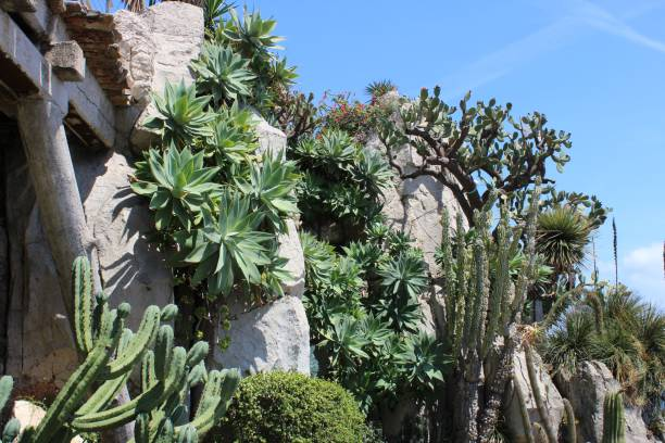 Royalty free jardin exotique pictures images and stock photos istock - Photo de jardin exotique ...