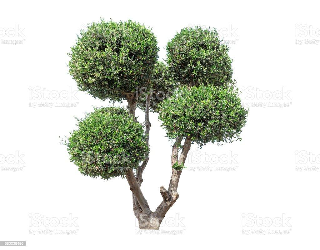 exotic green tree stock photo