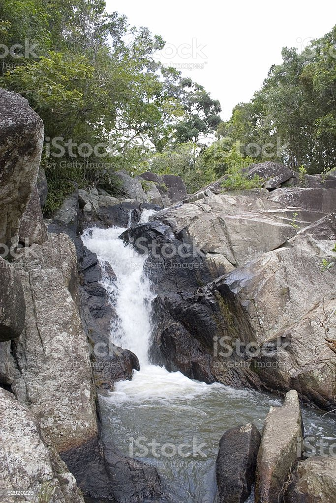 Exotic Jungle - Thailand royalty-free stock photo