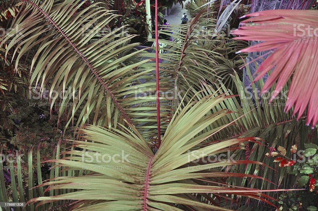 Exotic palm fronds royalty-free stock photo