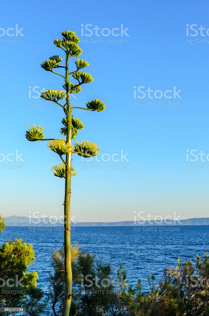 Exotic plant against the sky. royalty-free stock photo