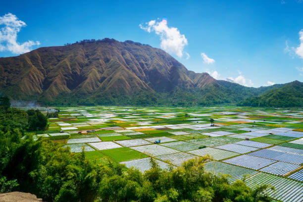 Exotic Rinjani foothill with colorful farmland