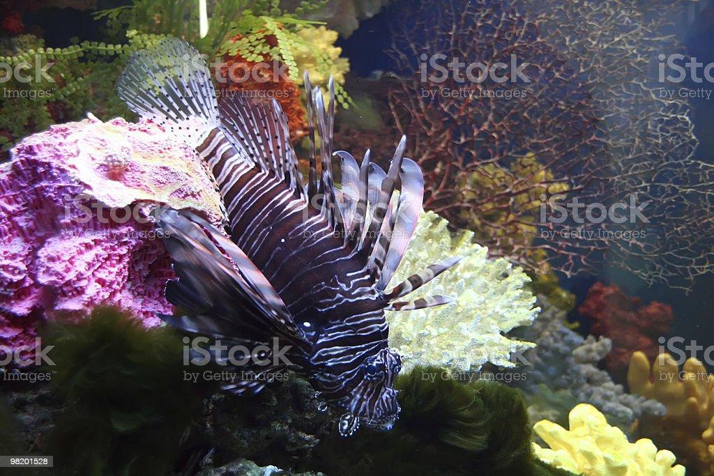 saltwatrer pesci esotici foto stock royalty-free