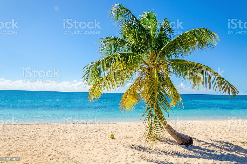 Exotic sandy beach with palm and coconut stock photo