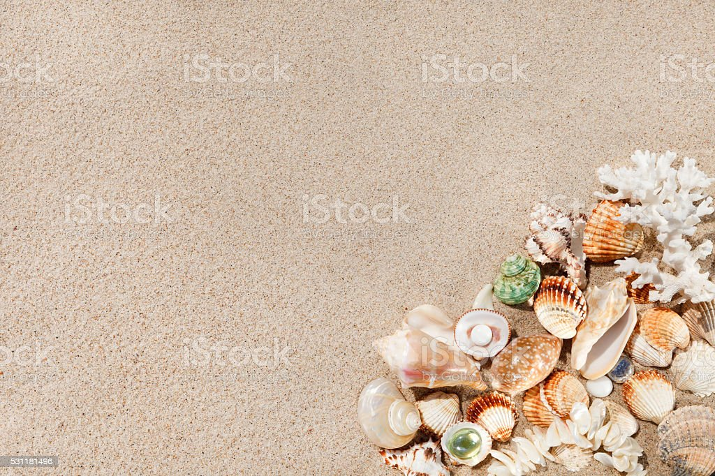 Exotic seashells on sand. Summer beach background. Top view stock photo