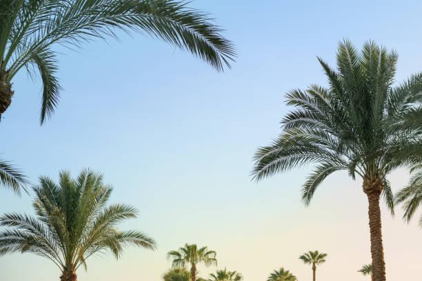 Exotischen Sommer tropische Muster Palmen und Himmel. – Foto
