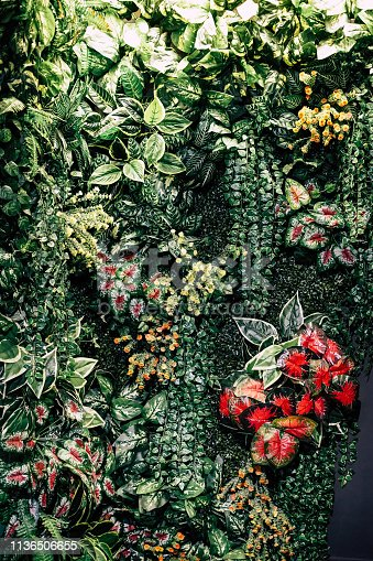 istock Exotic Tropical Garden for Background 1136506655