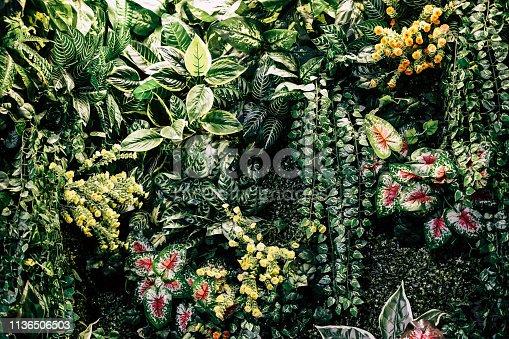 istock Exotic Tropical Garden 1136506503