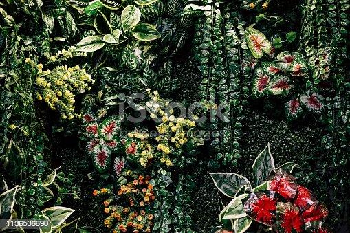 istock Exotic Tropical Garden 1136506690