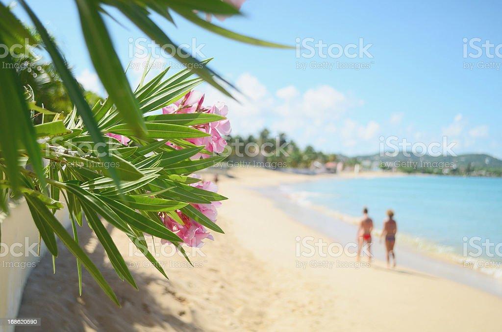 exotic vacation scene stock photo