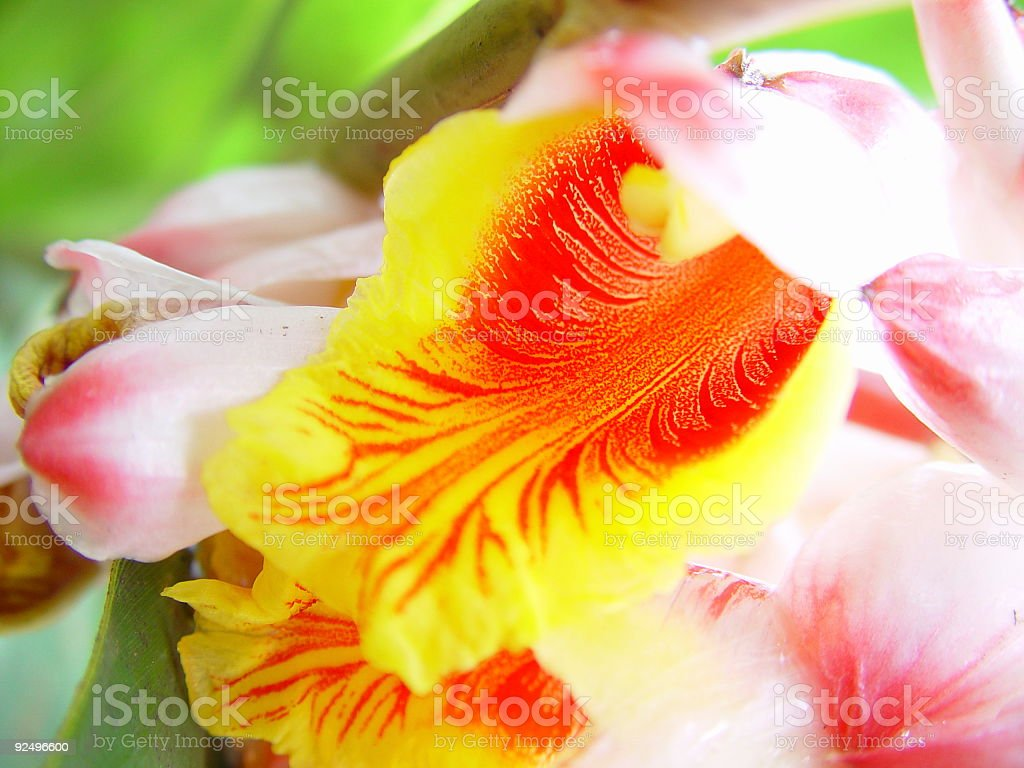 Exotic Yellow and Red Flower royalty-free stock photo