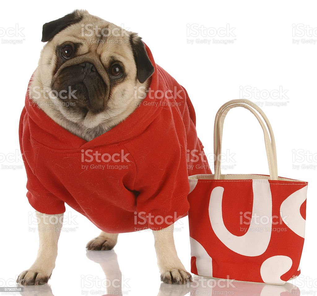 expensive dog stock photo