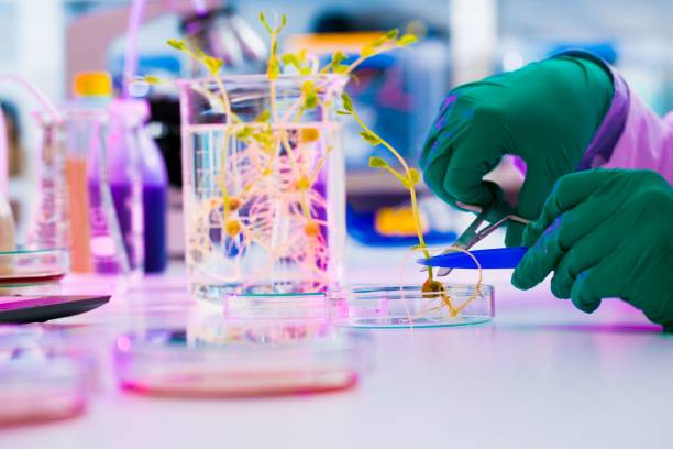 experiment with genetically modified plants. young woman laborat - genetic modification stock photos and pictures