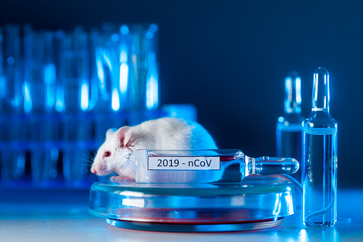 experiment with lab rat, mouse to find coronavirus vaccine in lab.