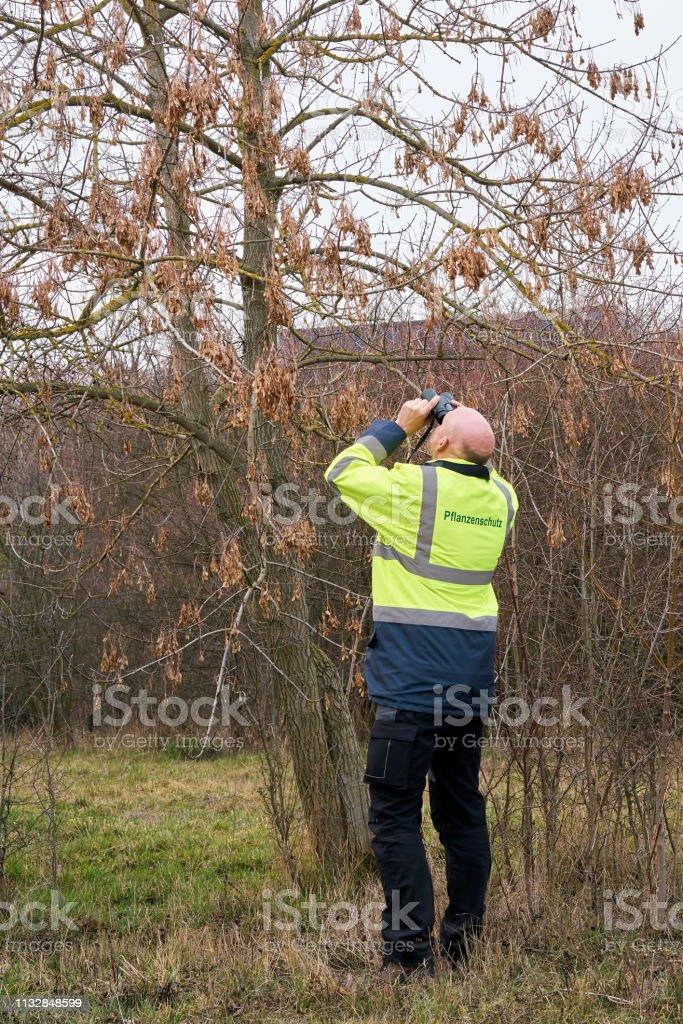 Experte bei der Prüfung von Bäumen – Foto