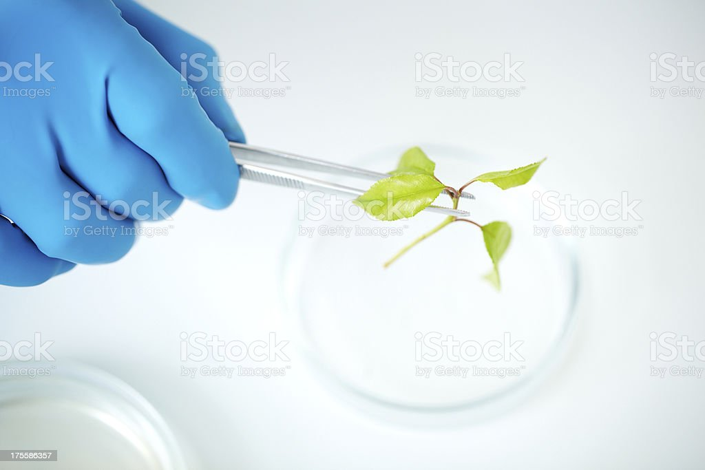 Exploration of green plant royalty-free stock photo