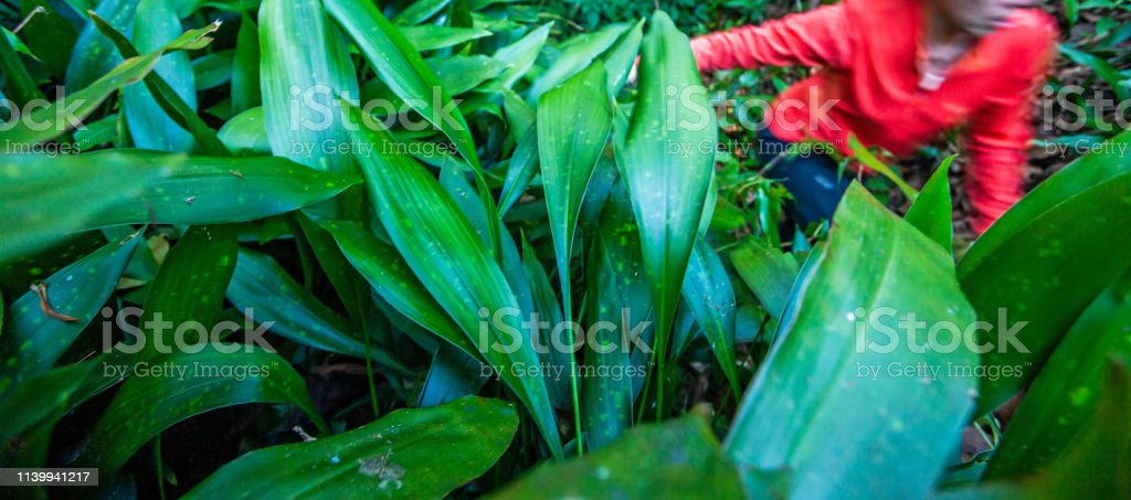 Explorer Women In Orange Clothing Exploring In Ancient Evergreen Forest Stock Photo Download Image Now Istock Largest animals usually live here. https www istockphoto com photo explorer women in orange clothing exploring in ancient evergreen forest gm1139941217 304869995