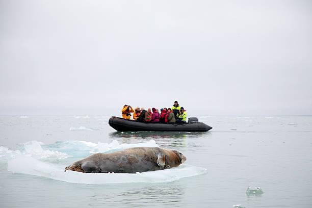 北極探検 - 野生動物旅行 ストックフォトと画像