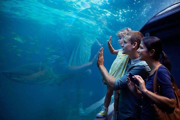 Exploring a different kind of world Shot of a young family enjoying a day at the aquariumhttp://195.154.178.81/DATA/i_collage/pi/shoots/783341.jpg aquarium stock pictures, royalty-free photos & images