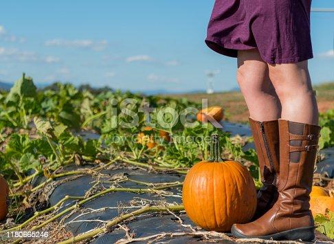 istock Exploring a Pumpkin Patch 1180665246