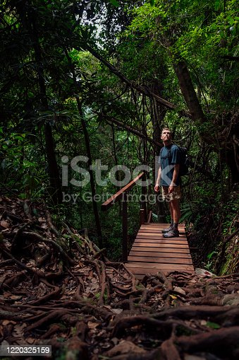 Caucasian male 25-29yrs standing on a bridge looking up at the lush foliage surrounding it.