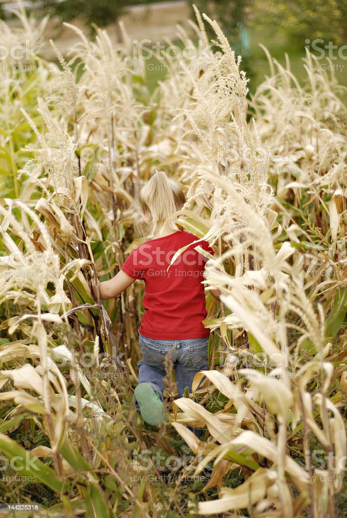 exploring in the corn royalty-free stock photo