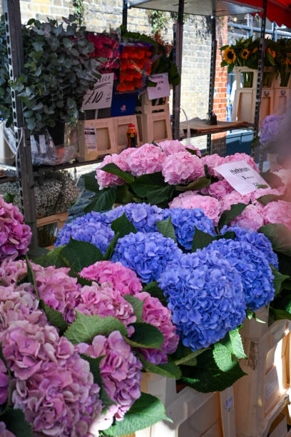 Exploring the Colombia Road Flower Market stock photo