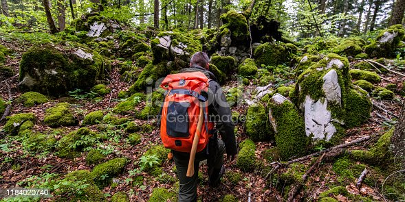 Rear view of a man with a backpack walking through a lush green forest.
