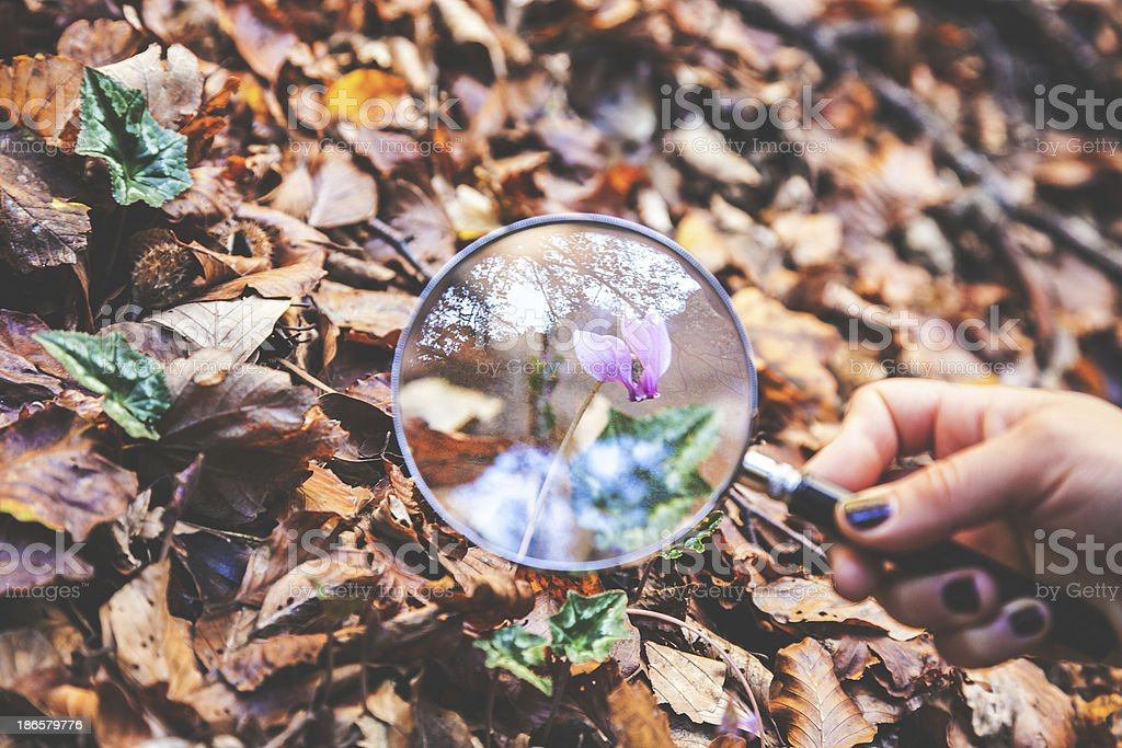 Exploring the nature royalty-free stock photo