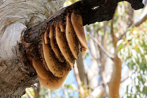 Exposed beehive stock photo