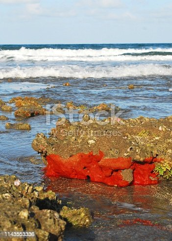 Exposed Florida reef with red sponge exposed at low tide