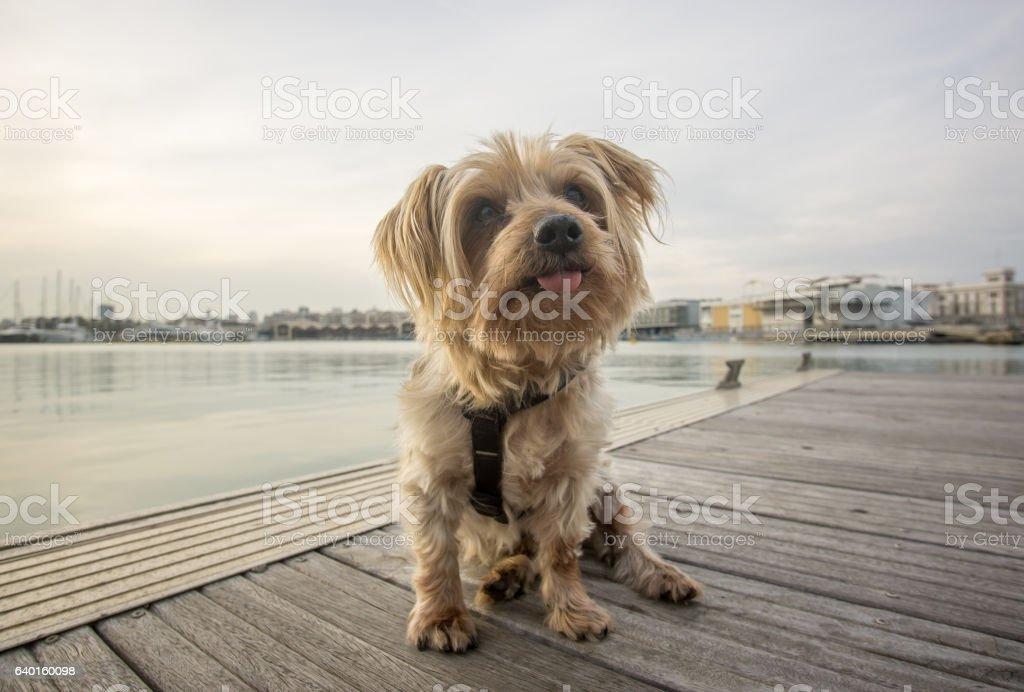 Expressive dog seated. Doggy with curiosity expression doggie twisting his stock photo