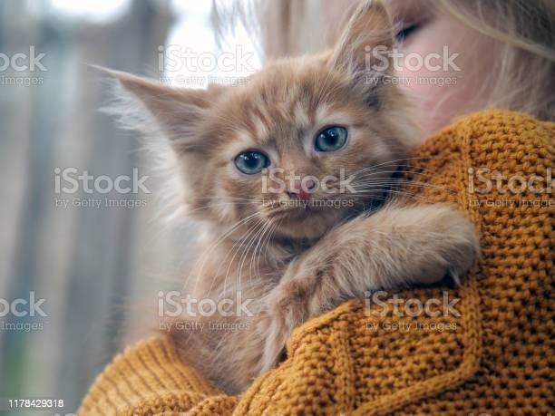 Expressive look of the animal portrait of a cat picture id1178429318?b=1&k=6&m=1178429318&s=612x612&h=bmvyey2osnua55 537zrn0bd06ojkjrvbthlo107qiq=