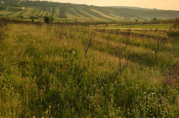 Umfangreiche ländliche Landschaft – Foto