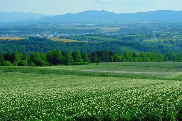 Extensive, Undulating and Green Patchwork of Farms in Asahikawa, Hokkaido stock photo