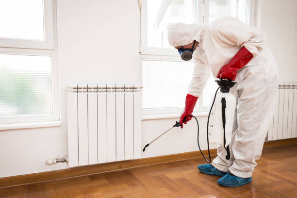 Exterminator in work stock photo
