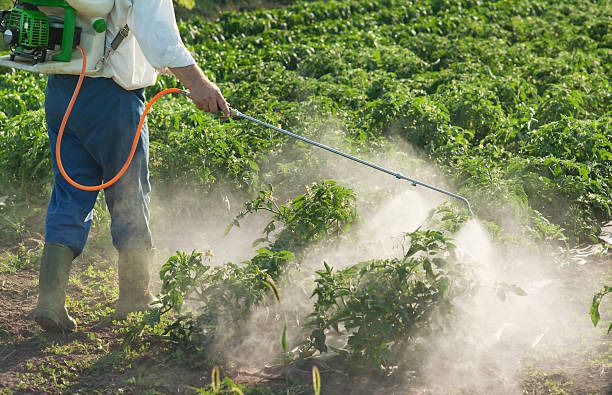 exterminator Man spraying vegetables in the garden crop sprayer stock pictures, royalty-free photos & images