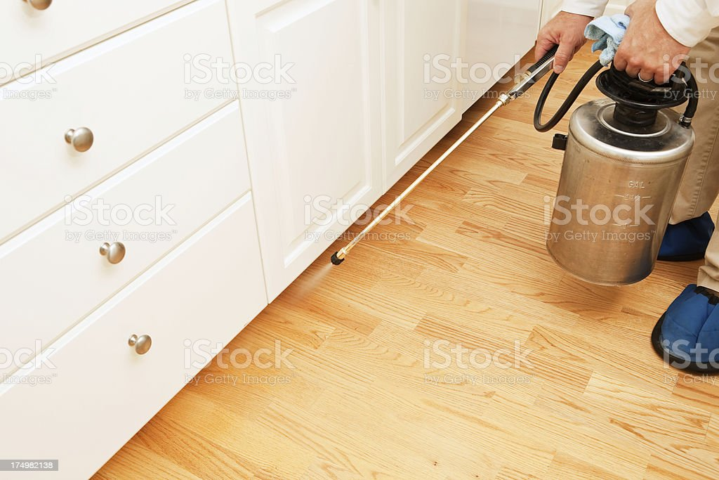 Exterminator spraying insecticide in a kitchen stock photo
