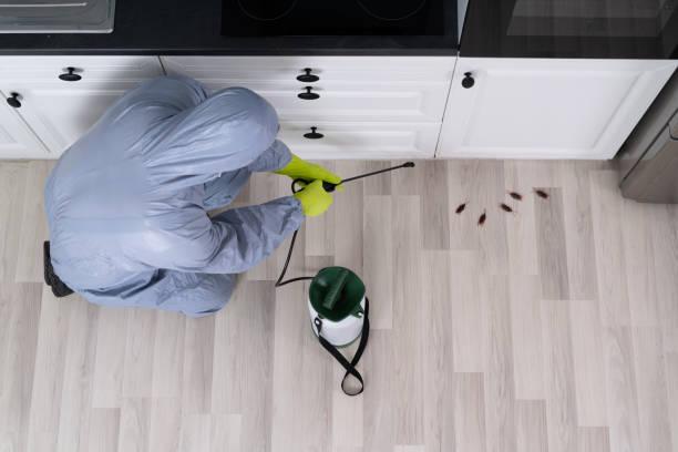 Exterminator Spraying Pesticide In Kitchen stock photo