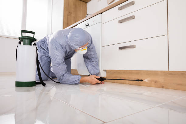 Exterminator Spraying Pesticide In Kitchen Exterminator In Workwear Spraying Pesticide With Sprayer termite stock pictures, royalty-free photos & images