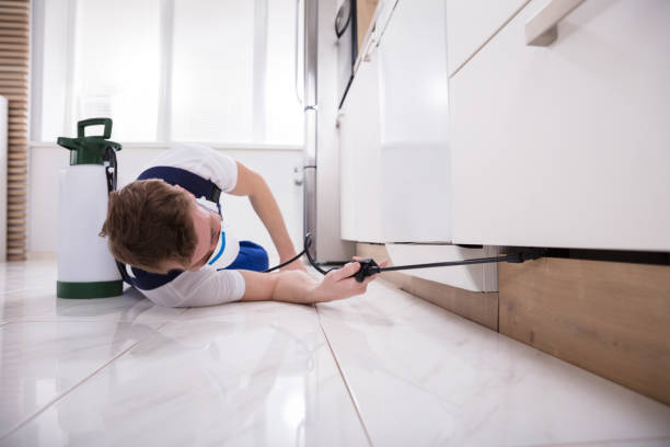Exterminator Worker Spraying Insecticide Chemical stock photo